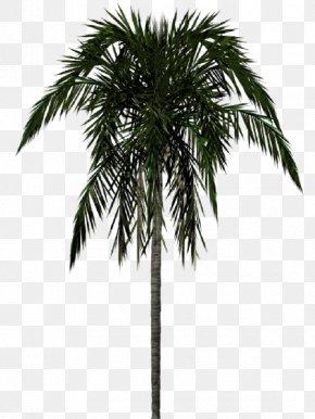 Jungle Trees - Arecaceae Clip Art PNG
