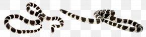 The Coral Snake Crawling - Reptile California Kingsnake Vipers PNG