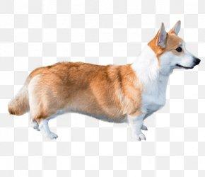 Corgi Dog - Cardigan Welsh Corgi Pembroke Welsh Corgi Norwegian Lundehund Dog Breed Companion Dog PNG