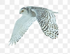 Bird - Bird Animal Fox .de PNG
