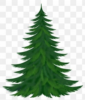 Transparent Pine Tree Picture - Pine Tree Clip Art PNG
