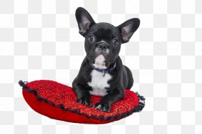 Lying On The Pillow Bulldog - French Bulldog American Bulldog Puppy Cat PNG