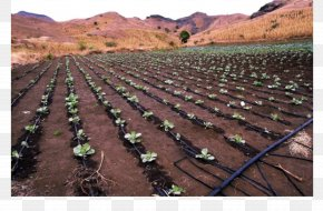 Water - Farm Drip Irrigation Agriculture Garden Watering Systems PNG