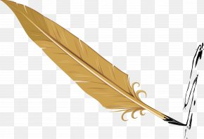 Feather Decorative Vector Design - Feather PNG