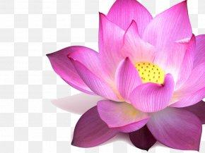 Lotus - Nelumbo Nucifera Flower Padma Pink Egyptian Lotus PNG
