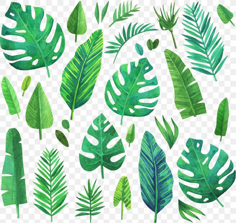 Watercolor Painting Leaf, PNG, 1861x1754px, Watercolour Flowers, Banana Leaf, Conifers, Creative Watercolor, Drawing Download Free