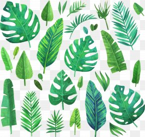 Watercolor Green Coniferous Plants - Watercolor Painting Leaf PNG