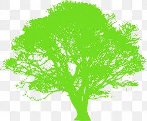 Tree - Tree Oak Trunk Clip Art PNG