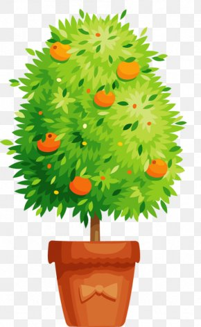 Persimmon Tree Bonsai - Flowering Pot Plants Flowerpot Clip Art PNG