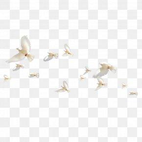 Birds - Rock Dove Homing Pigeon Bird Icon PNG
