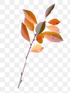 Salal Berry Incorporating Salal - Leaf Twig Plant Stem Clip Art PNG