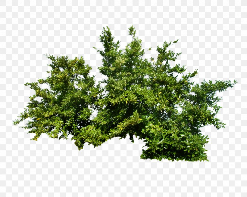 Shrub Tree, PNG, 1024x819px, Plant, Branch, Evergreen, Flower, Grass Download Free