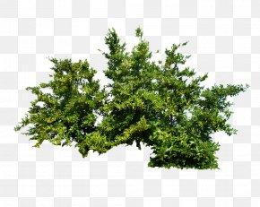 Bush Image - Shrub Tree PNG