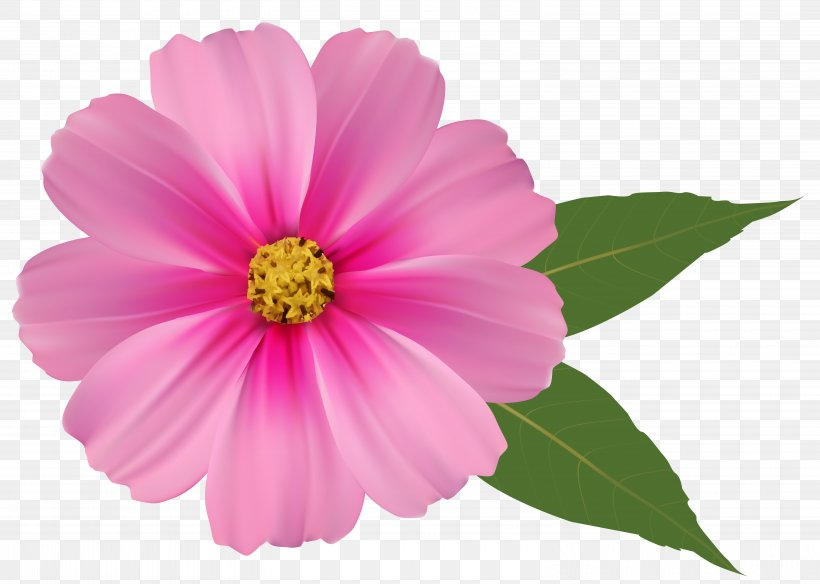 Pink Flowers Clip Art, PNG, 6195x4416px, Flower, Annual Plant, Color, Cosmos, Dahlia Download Free