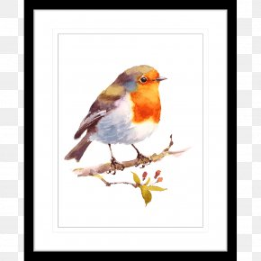 Bird Watercolor - Bird European Robin Watercolor Painting Drawing PNG