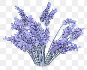 Violet Cut Flowers - Lavender PNG
