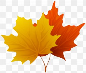 Fall Maple Leaves Decorative Clipart Image - Leaf Clip Art PNG