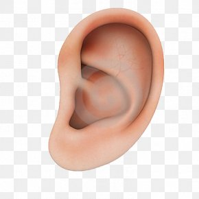 Human Ear Structure - Earring Structure PNG