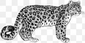 Leopard Cat - Felidae Cheetah Snow Leopard Tiger Clip Art PNG