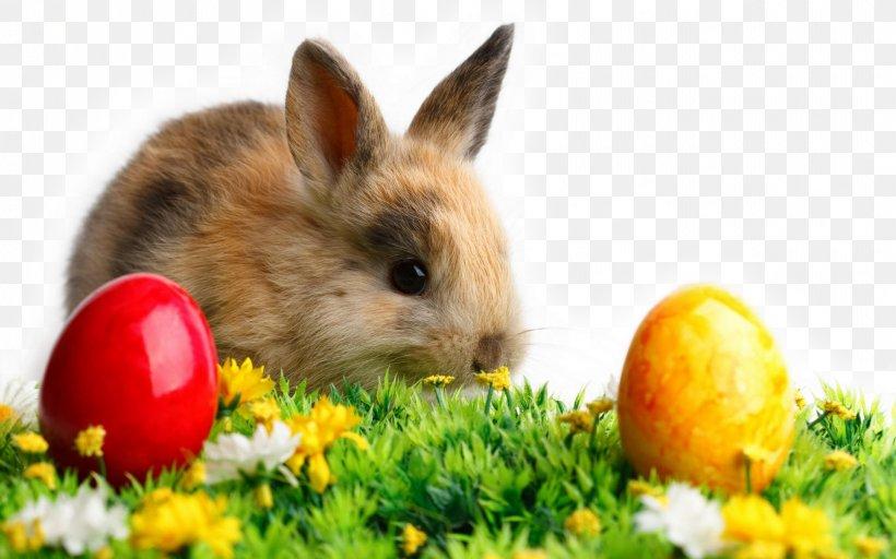 Easter Bunny Wedding Invitation Desktop Wallpaper Rabbit, PNG, 1920x1200px, Easter Bunny, Christmas, Christmas Card, Costume, Domestic Rabbit Download Free