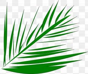 Palm Tree - Palm-leaf Manuscript Arecaceae Palm Branch Clip Art PNG