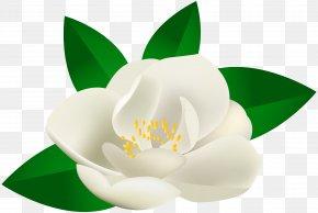 Rose Bush Flower Transparent Clip Art Image - Clip Art PNG