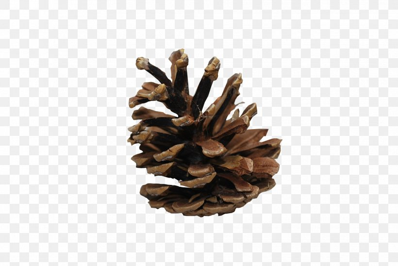 Conifer Cone Wallpaper, PNG, 1936x1296px, Coulter Pine, Cone, Conifer Cone, Conifers, Image File Formats Download Free