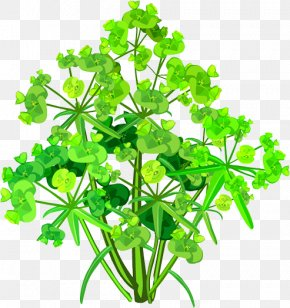 Plant - Parsley Plant Stem Leaf Flower PNG