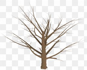 Tree Plan - Tree Branch Plant PNG