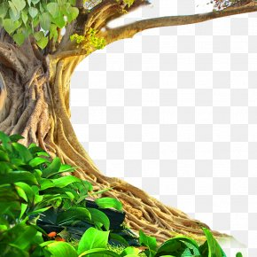 Green Plant Material - Tree Environmental Impact Assessment Environmental Protection Industry PNG