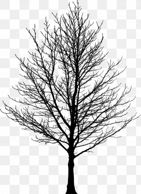 Tree Silhouette - Tree Forest Sugar Maple Drawing Clip Art PNG