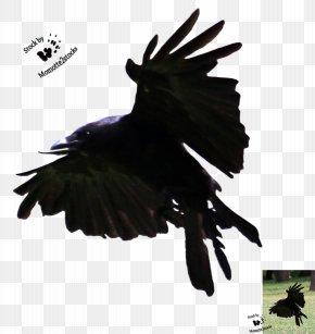 Flying Crow - American Crow Bird Flight Art PNG