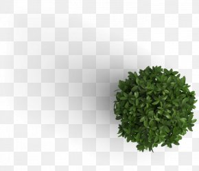 Tree Top View - Plant M B Jarvie Ltd. Information Tree PNG
