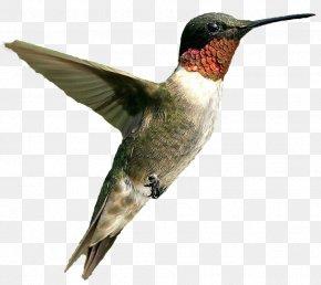 Hummingbird - Hummingbird Violin Knitting .net PNG