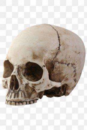 Skeleton Head Picture - Skull Skeleton PNG
