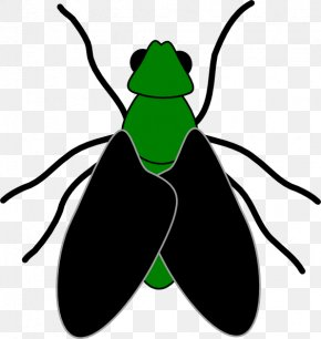 Cartoon Picture Of A Fly - Fly Free Content Website Clip Art PNG