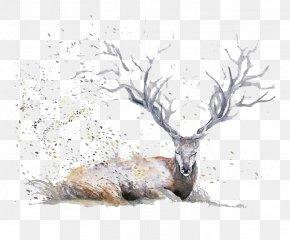 Cartoon Deer Antlers - Deer Watercolor Painting Drawing Illustration PNG