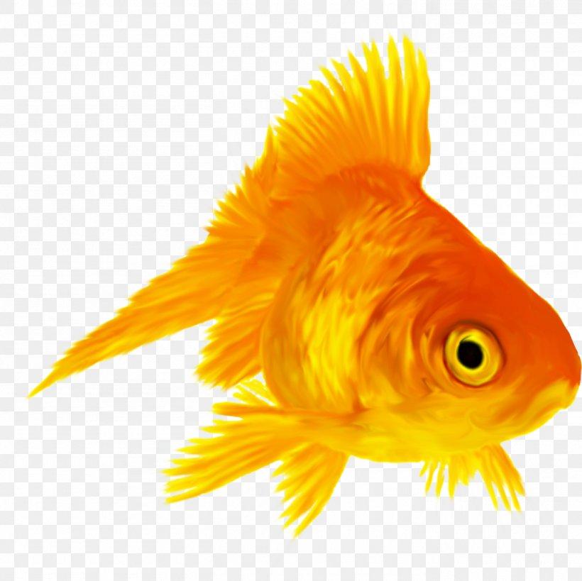 Ryukin Koi Siamese Fighting Fish Aquarium Png 1410x1410px
