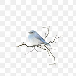 Bird - Bird Watercolor Painting Clip Art PNG