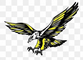 Cartoon Eagle - Hawk Icon PNG