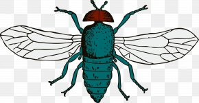 Fly 9 - Blue Bottle Fly Clip Art PNG