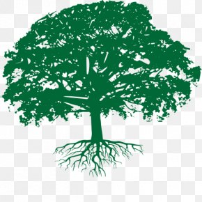 Tree - Branch Oak Tree Arborist Business PNG