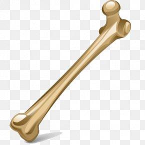 Bone Image - Bone Human Skeleton Icon PNG