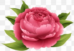 Red Peony Clip Art Image - Peony Pink Flowers Clip Art PNG