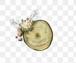 Tree Stump - Download Tree Stump Paper PNG