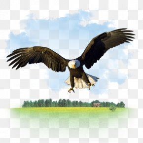 Gnu Animal Icon - Bald Eagle Desktop Wallpaper High-definition Television PNG