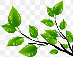 Rama - Leaf Green Clip Art PNG