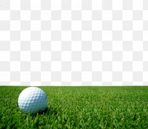 Golf On The Lawn - Augusta National Golf Club Golf Course Display Resolution Wallpaper PNG