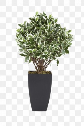 Potted Plants - Flowerpot Houseplant Euclidean Vector Tree PNG