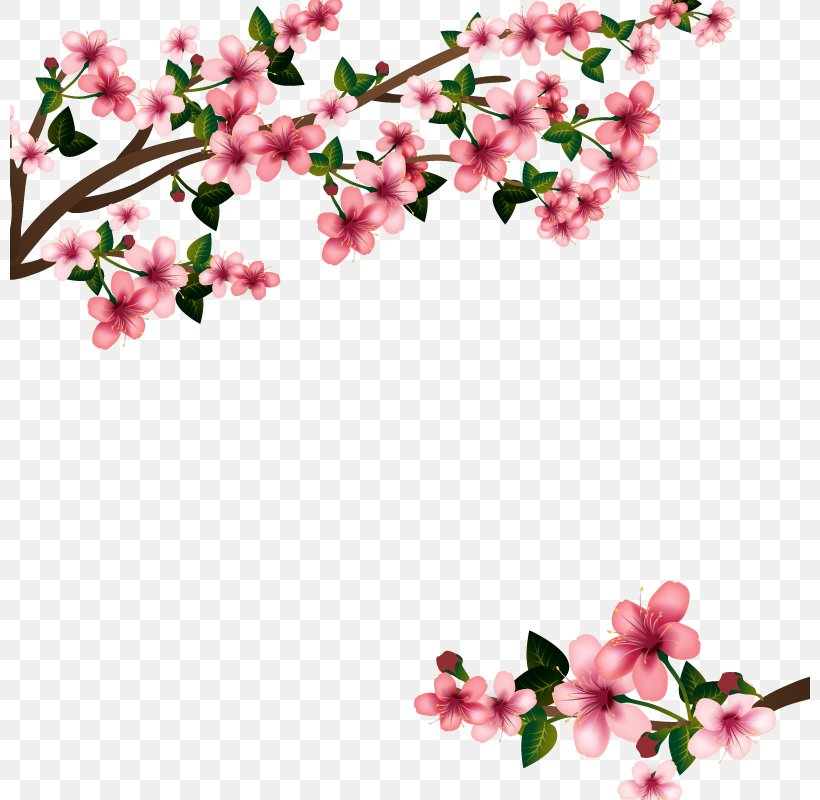 Cherry Blossom Euclidean Vector, PNG, 800x800px, Cherry Blossom, Blossom, Branch, Business, Cherry Download Free